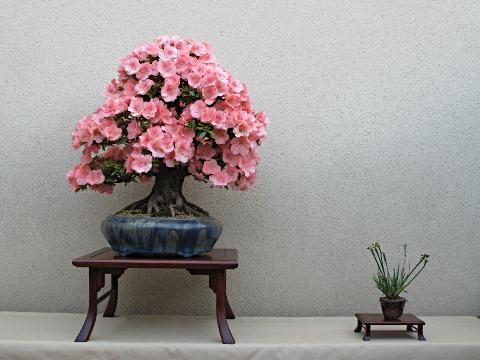 Macetas para bonsai - Mesas para bonsai ...
